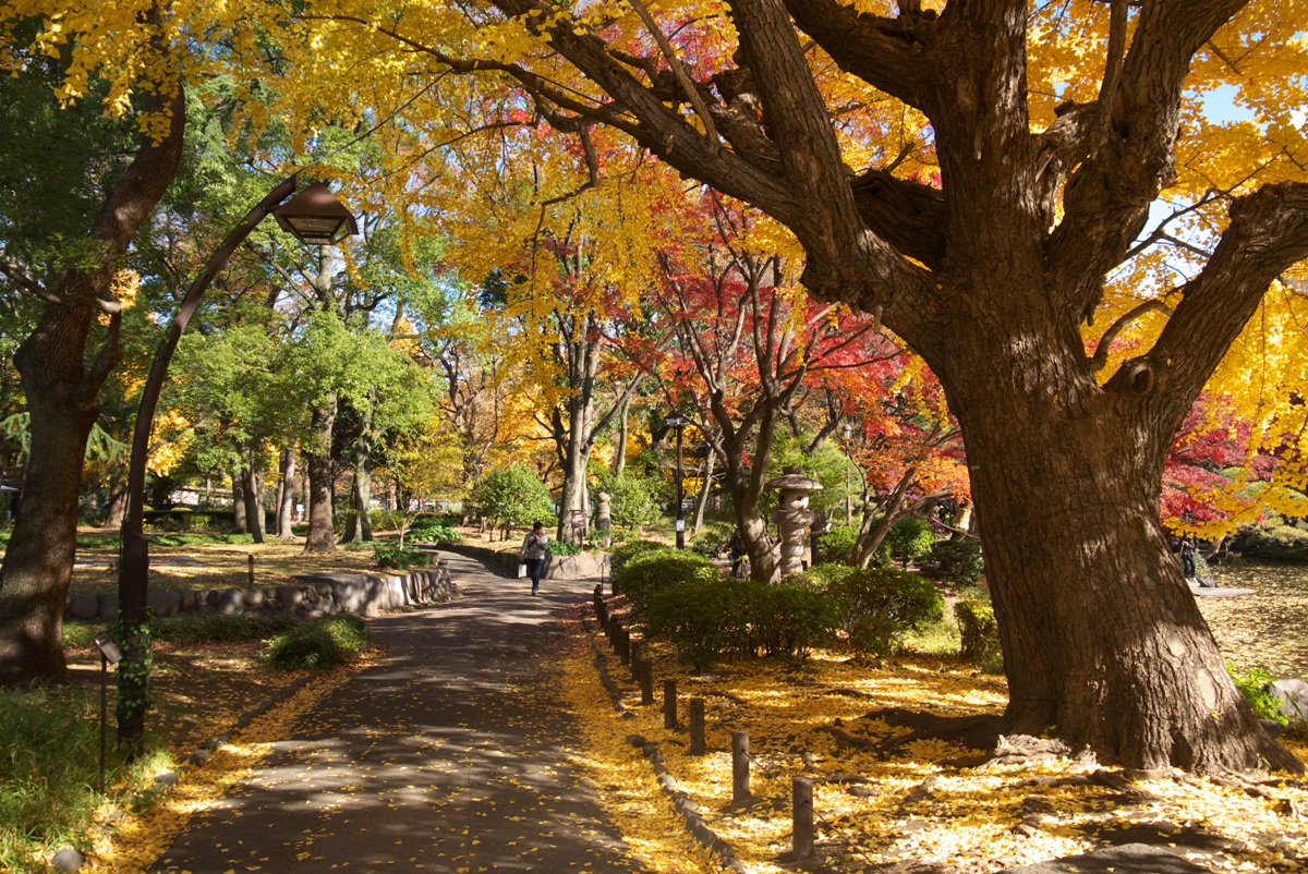 http://blog.goo.ne.jp/midorigf2/e/cbb9a0305fa76c14a173e3251d4766c9
